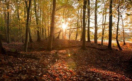 High Weald AONB Woodland Trees (inc veteran) Viv Blakey.jpg