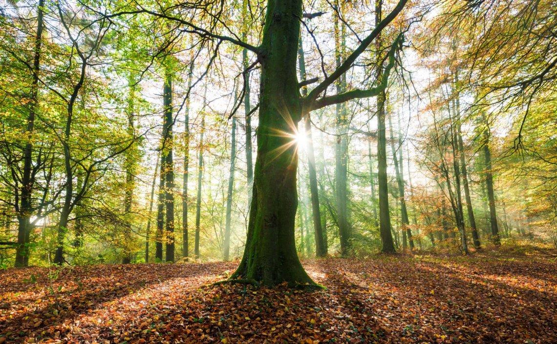 Blackdown Hills AONB - Dommet Wood.jpg