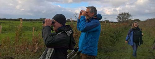 Birdwatching on the Solway Coast